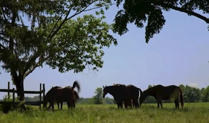 VIDEO Na ovom imanju umirovljenji trkaći konji dobivaju novu šansu za život