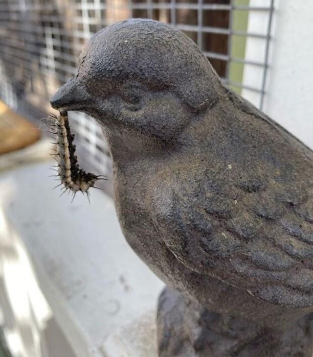 11. Kamena ptica kao da jede ovog crva. Na sreću, nije u opasnosti.🙂