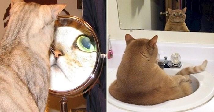 15 smiješnih fotki mačaka koje nastoje shvatiti kako funkcionira ogledalo