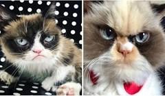Upoznajte novu mrzovoljnu mačku, nasljednicu nedavno uginule miljenice interneta