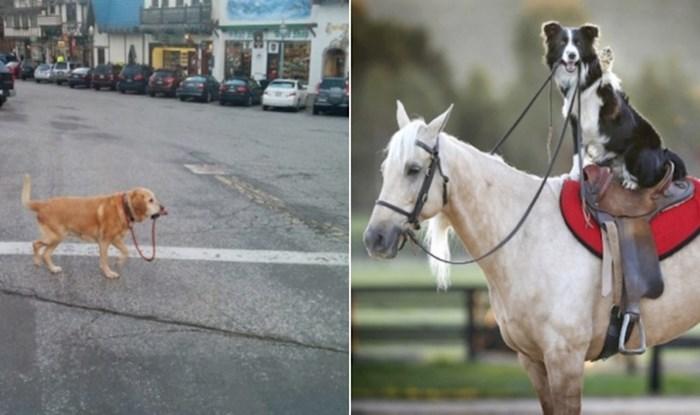 16 snažnih i samostalnih pasa kojima ljudi uopće ne trebaju