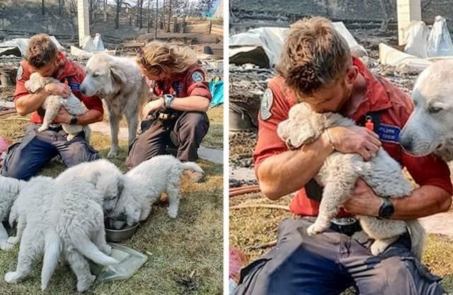 17. Vatrogasci spašavaju životinje sa izgorjele obiteljske farme