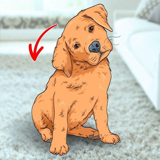 2. Zašto psi nagnu glavu kad vas slušaju?