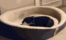 Pogledajte kako ova razmažena mačka maltretira jadnog psa
