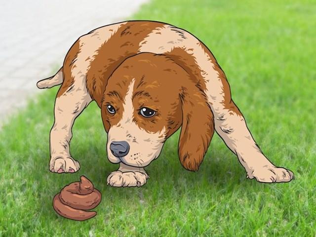 1. Zašto neki psi jedu vlastiti izmet?