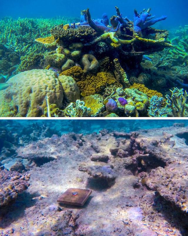 6. Oko 89 posto koralja nestalo je s područja Velikog koraljnog grebena zbog klimatskih promjena.