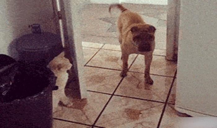 Mačka je na presmiješan način dala do znanja psu da joj se ne približava