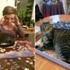 20 mačaka koje su svojim vlasnicima odlučile pomoći složiti puzzle
