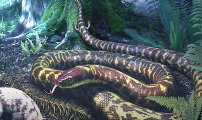 VIDEO 15 izumrlih životinja koje su izgledale kao iz noćne more