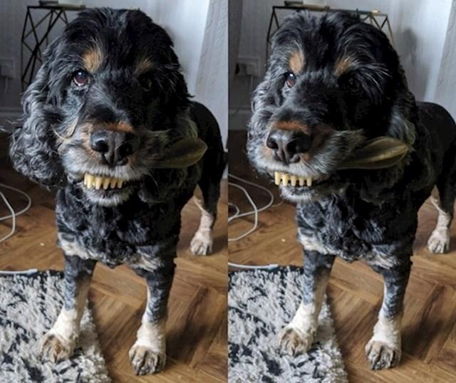 17. Moj pas izgleda jezivo dok žvače svoju omiljenu žvakalicu za pse...