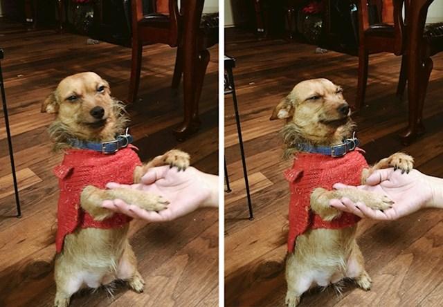 """9. """"Moj pas traži da ga utješim nakon što je moja mama vikala na njega."""""""