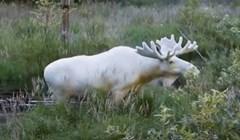 VIDEO 15 albino životinja koje se rijetko mogu vidjeti