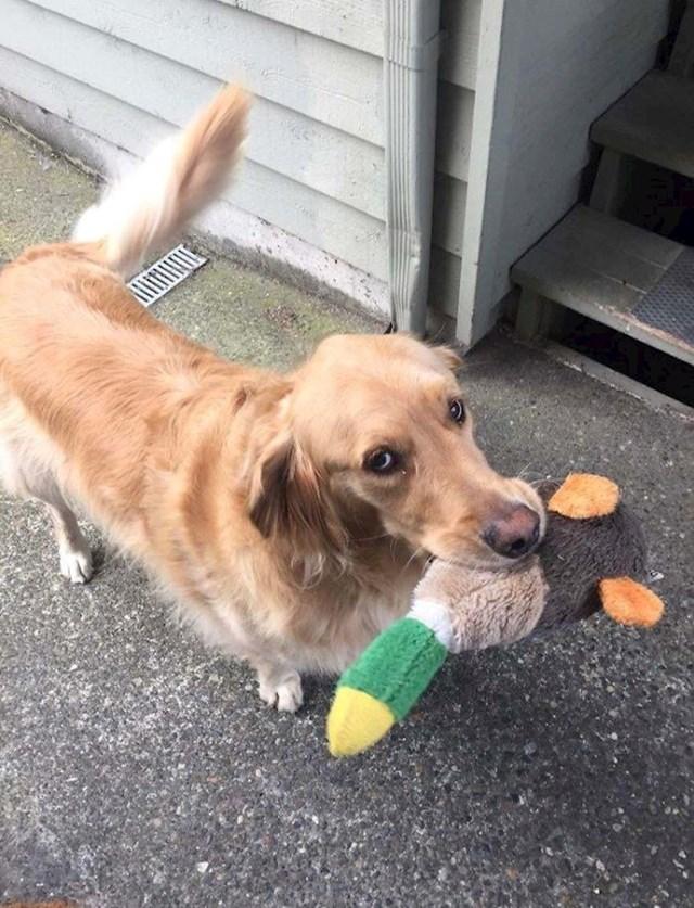 10. Ovo je Jasper, susjedov pas koji mi nosi svoje igračke svaki put kad me vidi.