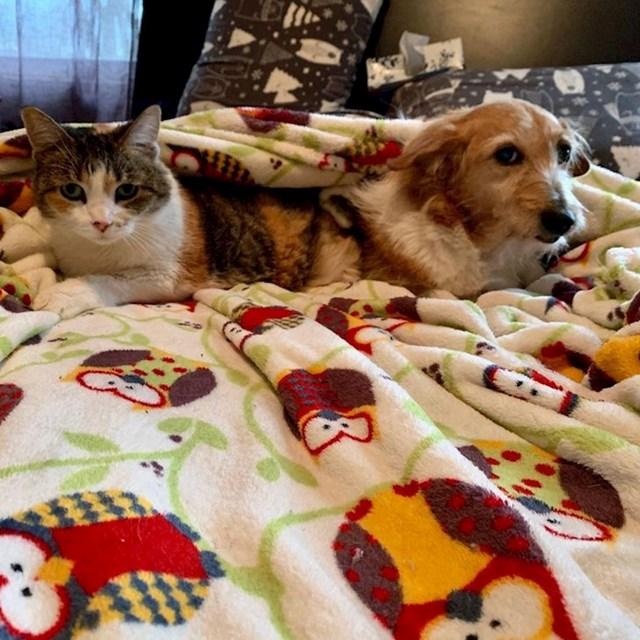 3. Ono kad imate mali stan, a želite i psa i mačku, pa dobijete 2 u 1.🤣