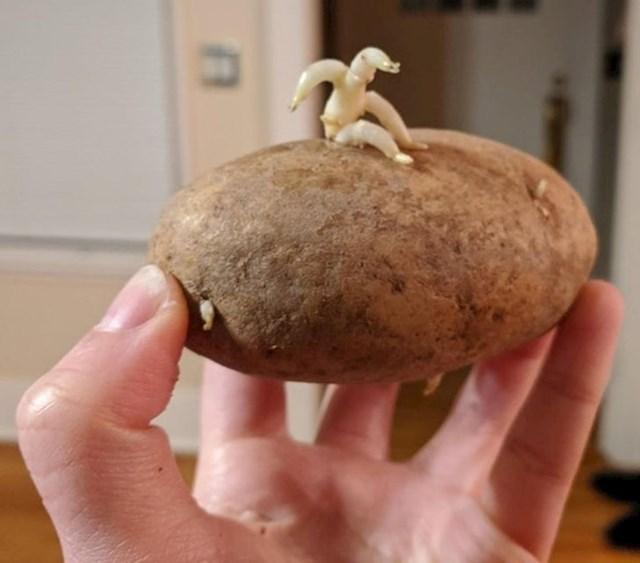 11. Krumpir iz kojega, čini se, netko pokušava pobjeći