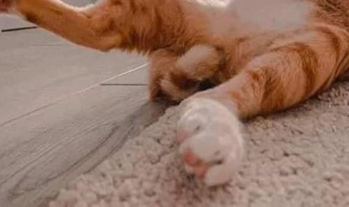 Dok je obavljala osobnu higijenu, ova maca slučajno je napravila nešto preslatko