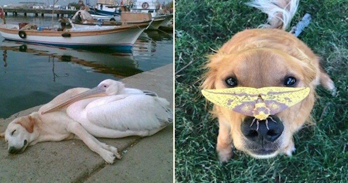 40 fotografija koje će vas uvjeriti da su psi najbolje životinje na svijetu