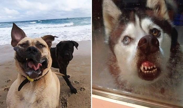 Urnebesne fotke pasa koji definitivno ne bi mogli biti modeli