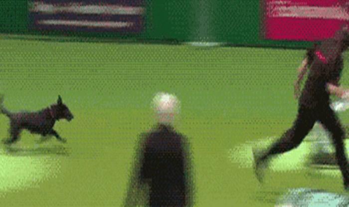 Nešto jako važno prekinulo je ovog natjecateljskog psa u trku