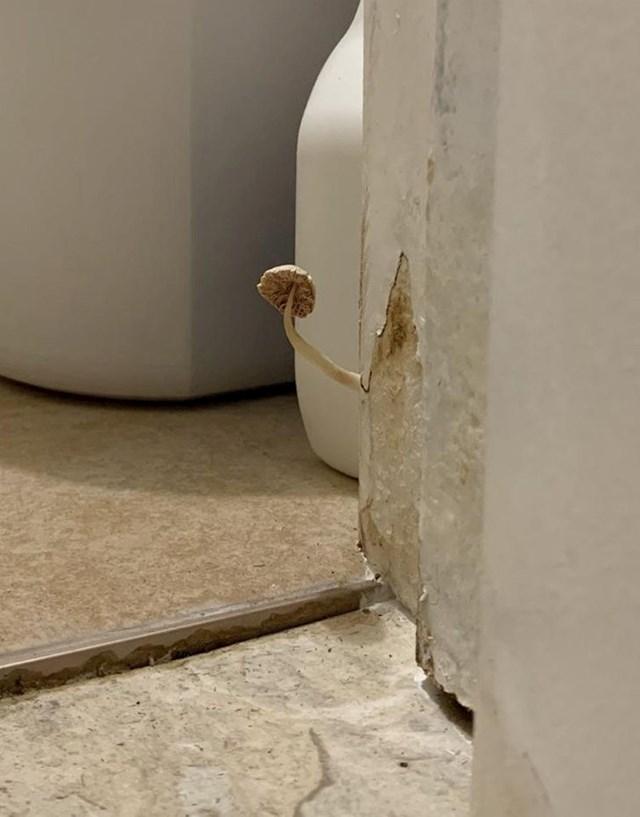 7. U ovoj kupaonici raste jedna gljiva