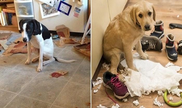 20 fotki pasa koji su uhvaćeni u nepodopštinama i jako ih je sram
