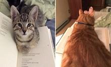 Dosadne mačke koje odbijaju pustiti svoje vlasnike da u miru čitaju knjigu