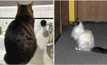 20 smiješnih mačaka koje imaju poseban odnos sa zidom