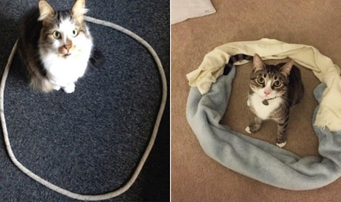 Jeste li znali da će mačke uvijek radije sjesti unutar nekog kruga? Testirajte i vi svoju ljubimicu
