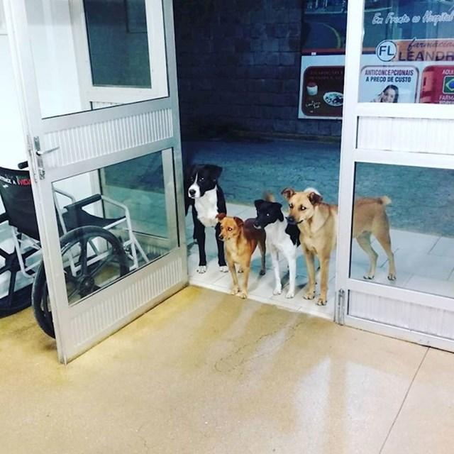 13. Beskućnik je završio u bolnici i njegovi pseći prijatelji ga čekaju.