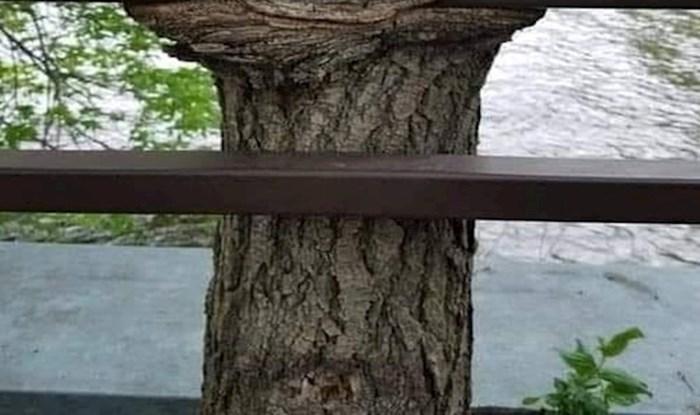 Priroda je jako kreativna, a ovaj primjer to definitivno potvrđuje