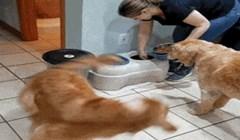 Pas ne može doći k sebe od uzbuđenja kad vidi hranu, ovo je presmiješno