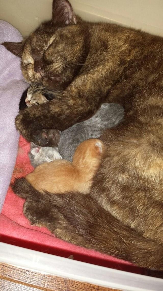 """""""Moja mačka nije voljela dodire sve dok nije okotila. Sad svoje mačiće ne ispušta iz naručja."""""""