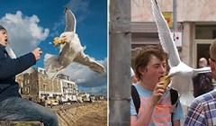 Urnebesne fotke proždrljivih galebova kojima je glavna misija ukrasti hranu