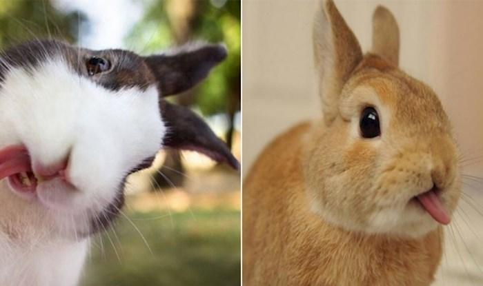 Preslatke fotke zečeva koji plaze jezik odmah će vas oraspoložiti