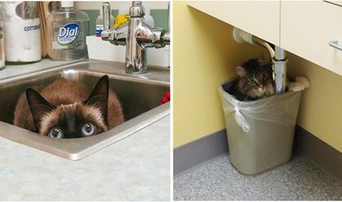 """20 """"hrabrih"""" mačaka koje su dale sve od sebe da se sakriju od veterinara"""