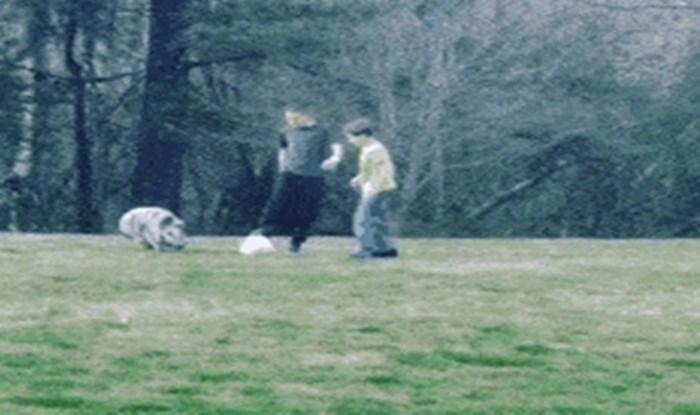 Probajte se ne nasmijati ovoj simpatičnoj svinji koja igra nogomet