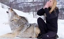 VIDEO Žena se infiltrirala u čopor vukova kako bi pokazala da su to nježna bića puna ljubavi