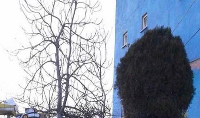 Ovakav genijalan spoj ulične umjetnosti i prirode rijetko se viđa