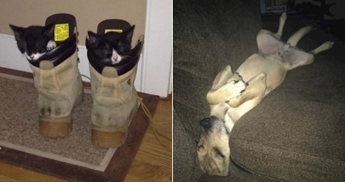 Simpatični kućni ljubimci koji imaju talent zaspati bilo kad i bilo gdje