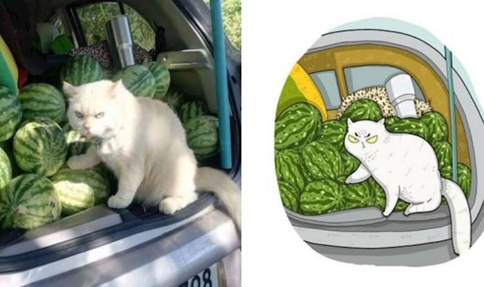 Netko na Instagramu pretvara viralne fotke mačaka u slatke ilustracije; evo najboljih primjera