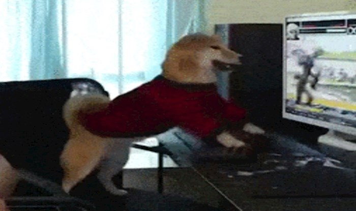 I psi se mogu navući na videoigrice, morate vidjeti njegovu reakciju kad vlasnik ugasi komp