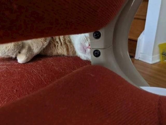 5. Maca s robotskim očima