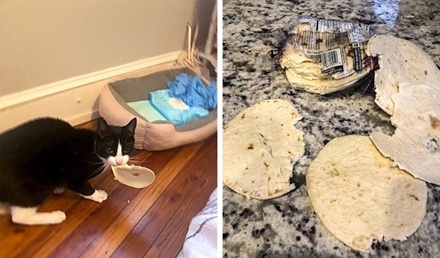 """3. """"Otišla sam iz sobe na 3 minute i probala je baš svaku tortilju!"""""""