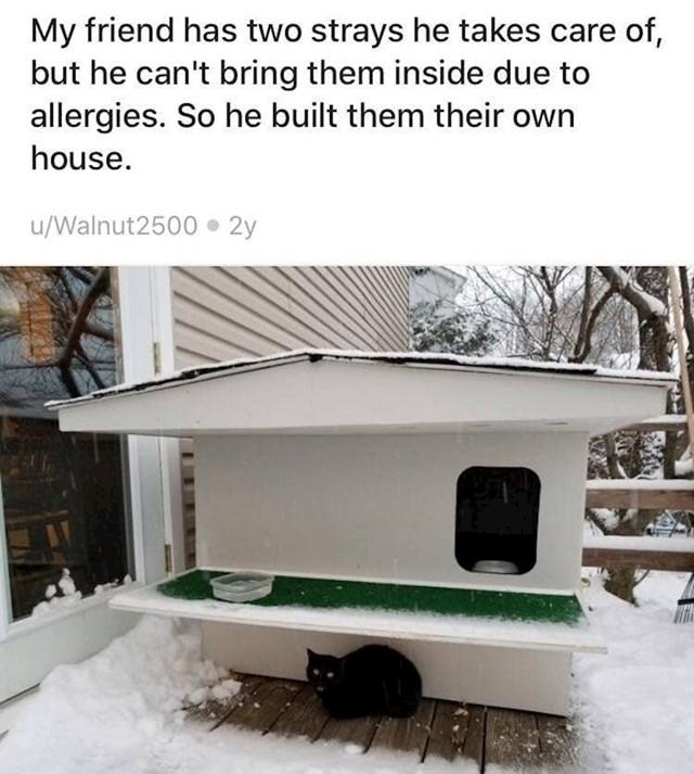 """8. """"Moj prijatelj ima dvije ulične mace za koje se brine, ali zbog alergije ih ne može puštati u kuću. Zato im je izgradio ovu kućicu."""""""
