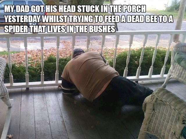 5. Moj tata zaglavio je glavu u ogradi kad je pokušavao nahraniti pauka koji živi u grmlju mrtvom pčelom.