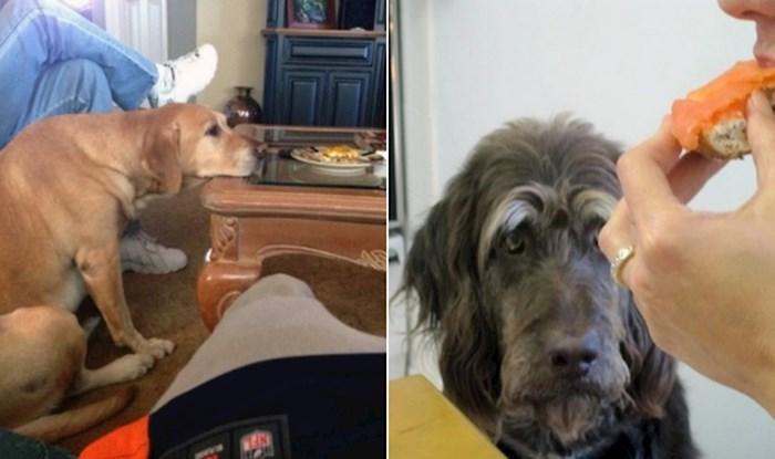 13 pasa koji toliko tužno žicaju hranu da to boli gledati