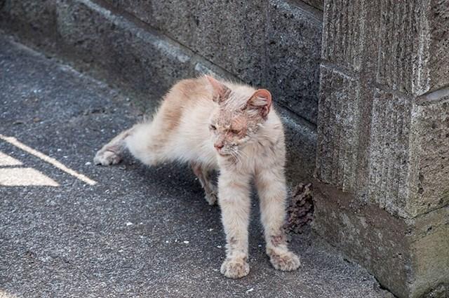 Chataro na dan kad je dolutao pred kuću umirovljenog fotografa.
