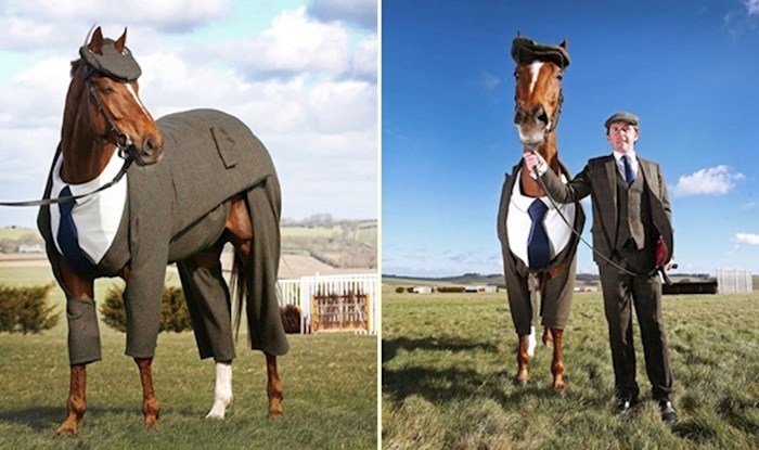 Ovo je prvi konj koji je obukao dizajnersko odijelo skrojeno po mjeri