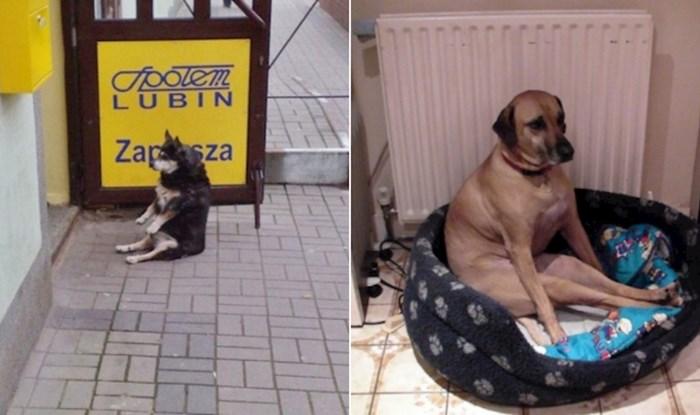 20+ urnebesnih pasa koji sjede u stvarno jako čudnim pozama