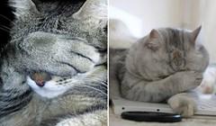 17 urnebesnih mačaka koje su se posramile svojih djela